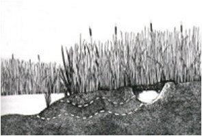 arazide-su-bulma-3